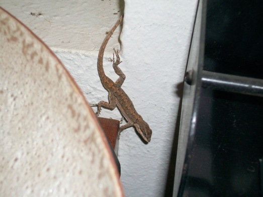 Gecko Visitor