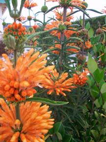 Grover Beach Flowers