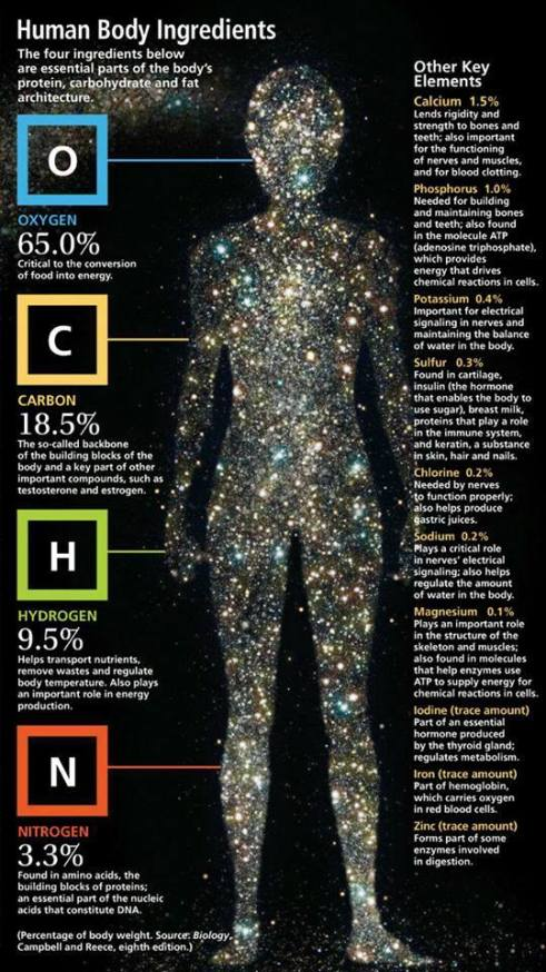 human body ingredients